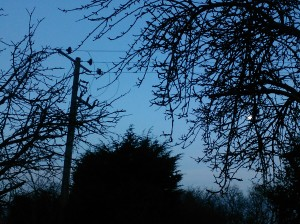 Telegraph pole in my garden's airspace