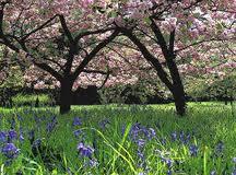 Spring blossom at Westonbirt Arboretum