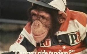 Still from PG Tips advert using chimpanzee Mr Shifter