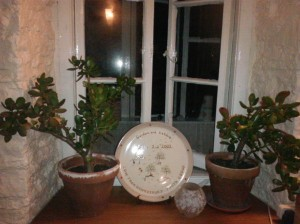 Tidy kitchen windowsill with two pot plants