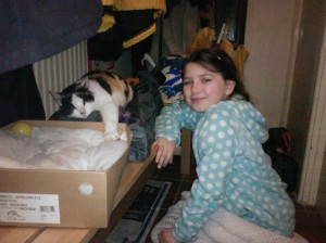 The calico cat and its new bed