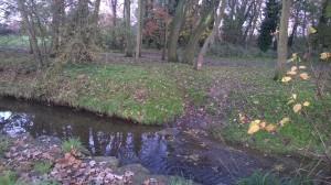 Photo of woodland with brook