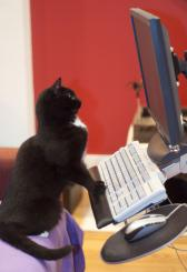 Photo of typing cat