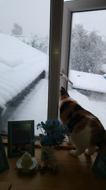 photo of Dorothy looking out of my study window into the snow