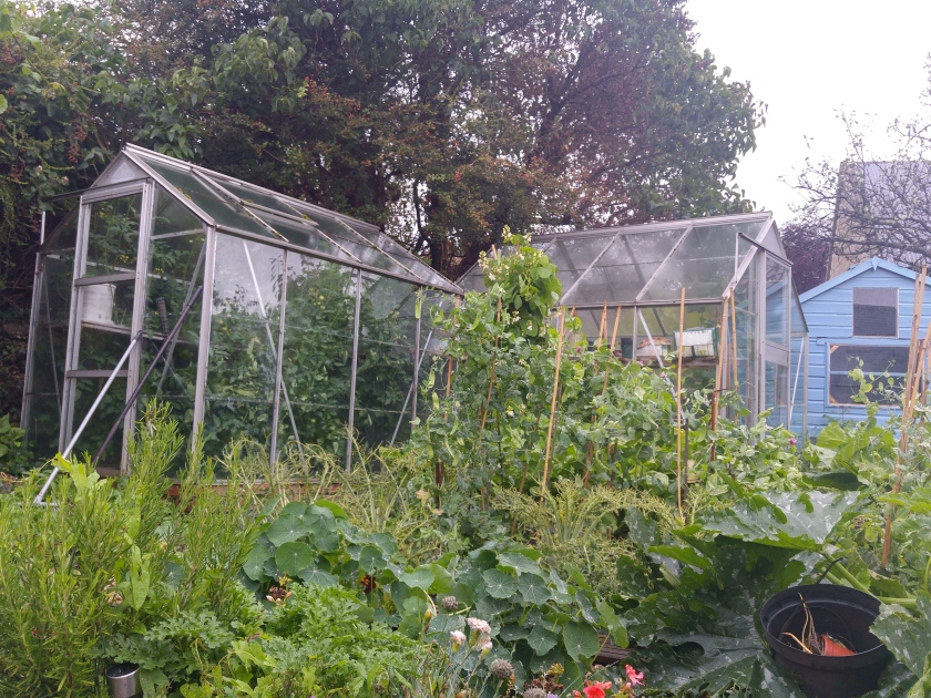 Bountiful summer garden makes it easy to get our five-a-day
