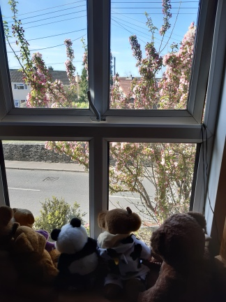 photo of window with teddies on the windowsill and blossom tree outside
