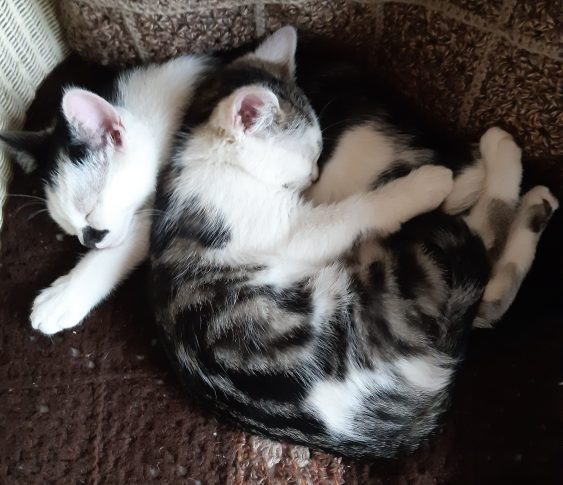 photo of two sleeping kittens curled up