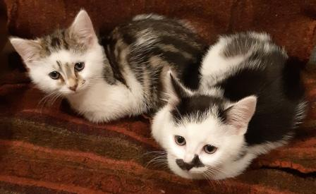 photo of two kittens lying on a stripy blanket